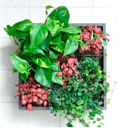 Cuadro vegetal mi jard n vertical - Cuadro jardin vertical ...
