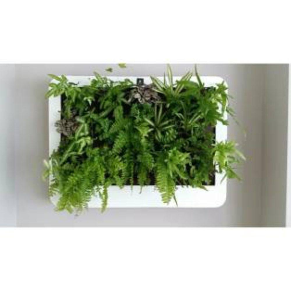 Cuadro vegetal xxl fibra blanco con helechos mi jard n - Cuadro jardin vertical ...
