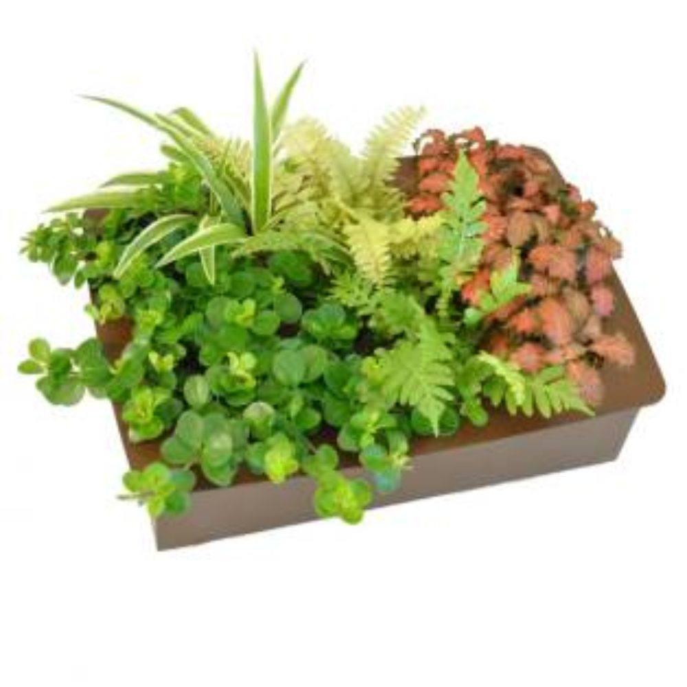 Cuadro vegetal centro de mesa mi jard n vertical for Cuadro jardin vertical