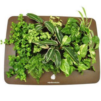 cuadro vegetal completo