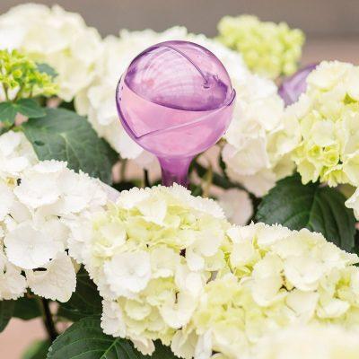 Elho Aqua care rosa transparente