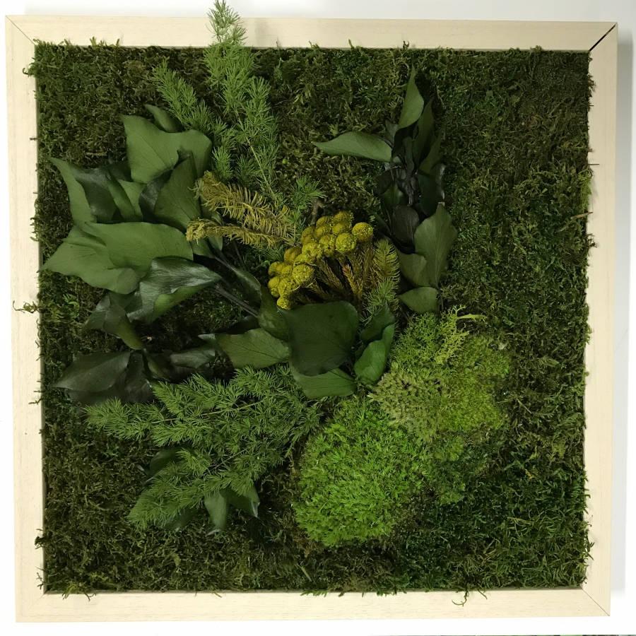 Cuadro vegetal afrodita
