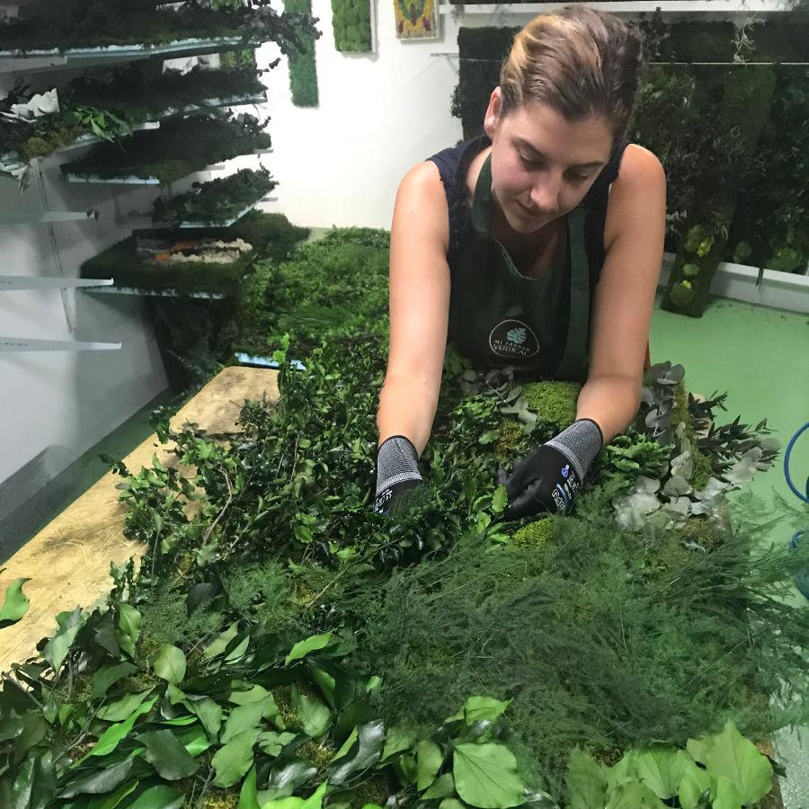 Cuadro vegetal liquen: Modelo Atenea