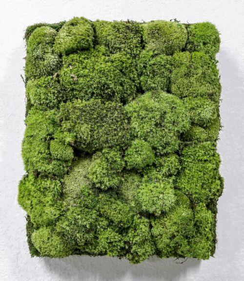 Cuadro Vegetal Manhattan