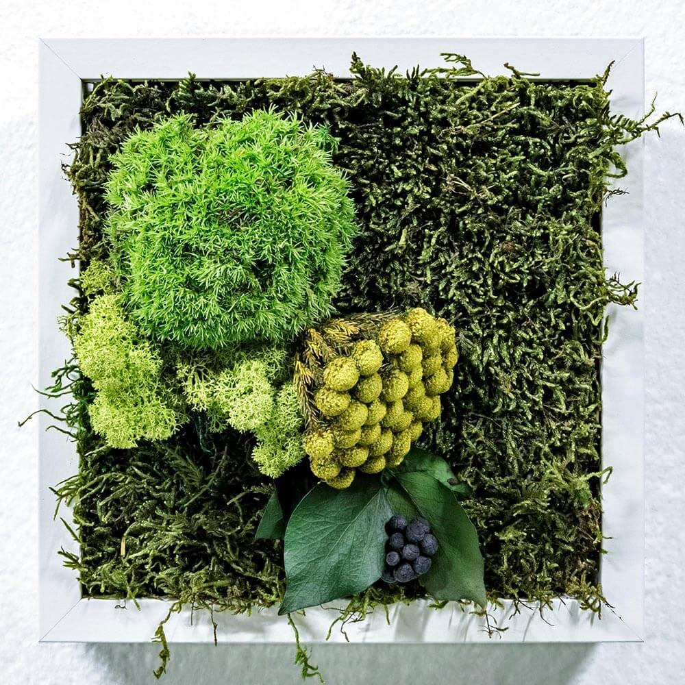 ´cuadro vegetal