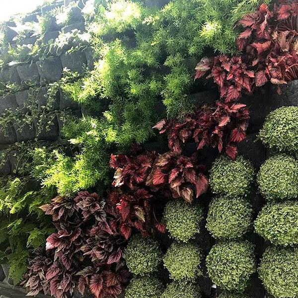 jardín vertical natural